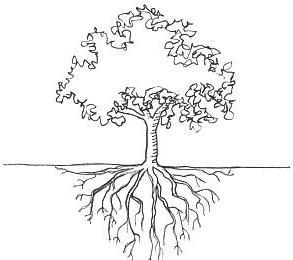 Плодові дерева взимку сонячні опіки
