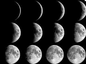 садово-городні роботи за фазами Місяця