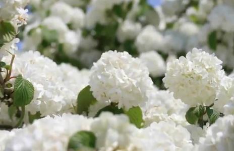 Парк квітів гарне відео фото