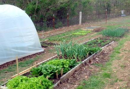 календар садівника-городника