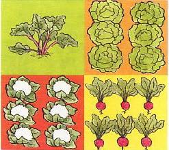 Таблиця сумісності овочевих рослин