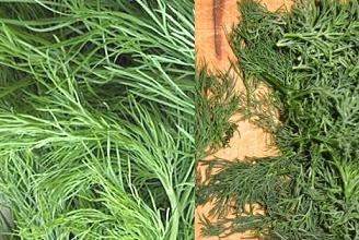 Як заготовити зелень на зиму - солити, сушити, маринувати