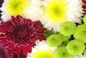 Календар робіт в квітнику, ягіднику, винограднику на жовтень