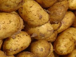 лікування картопляним крохмалем